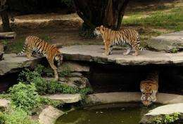 An escaped tiger at Cologne zoo made its way into a nearby building and fatally attacked a 43-year old woman