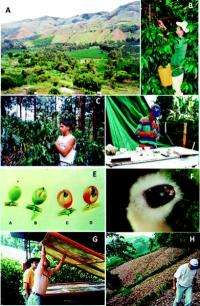 An integrated pest management program for coffee berry borer in Colombia