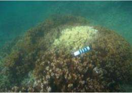 Another outbreak of coral disease hits reefs of Kaneohe Bay, Hawai'i