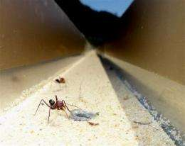 Ants can learn vibrational and magnetic landmarks