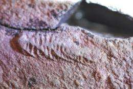 Ash fall preserved 'nursery' of earliest animals