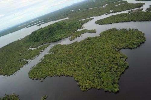 A wetland forest at the Danau Sentarum National Park on Indonesian Borneo island