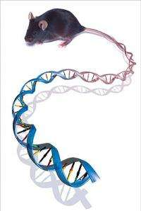 Beyond base pairs: Mapping the functional genome