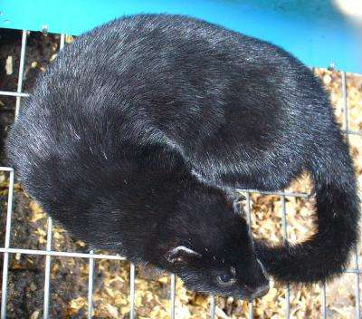 Bored mink snack between meals, lie awake in bed