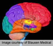 Brain changes may hamper decision-Making in old age