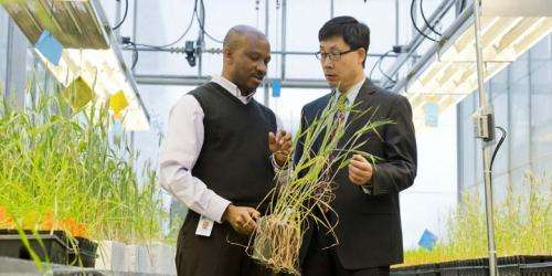 Building better barley