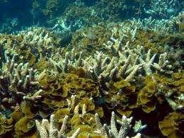 Bulk carrier the ID Integrity is drifting towards the Shark and Veema reefs