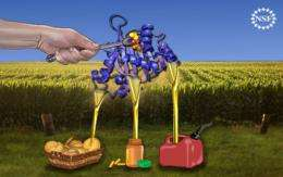 Cellular secrets of plant fatty acid production understood