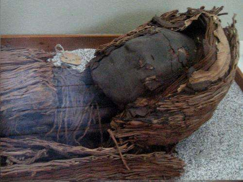 Chilean team proposes theory on why early culture began to mummify their dead