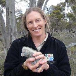 Cockatoo survival under threat