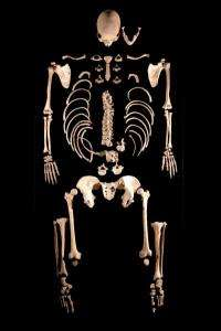 CSIC recovers part of the genome of two hunter-gatherer individuals from 7,000 years ago