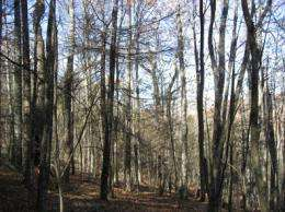 Death of hemlock trees yields new life for hardwood trees, but at what cost to the ecosystem?