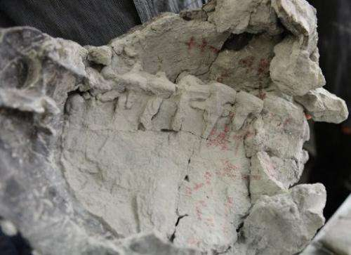 Digs in the area have turned up several hundred fossils from six species including turtles, sharks and dinosaurs
