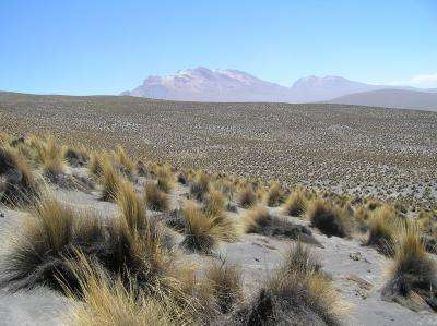 Diverse ecosystems are crucial climate change buffer