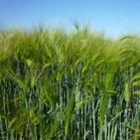 DNA discovery key to drought resistant crops