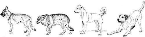 Domestic dogs display empathic response to distress in humans
