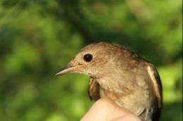 Drought in the Horn of Africa delays migrating birds