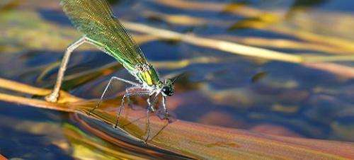 Droughts could cause collapse of food webs