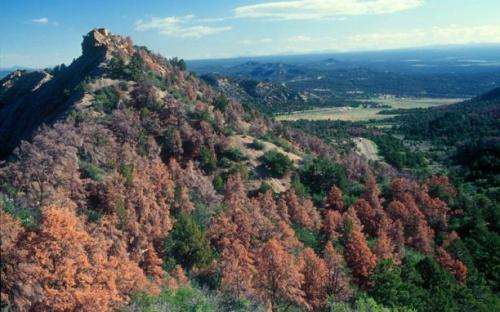 Droughts render trees less able to ward off disease, insects