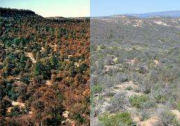 Dying trees in Southwest set stage for erosion, water loss in Colorado River