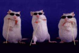 Escape from the mouse trap? New experimental models developing