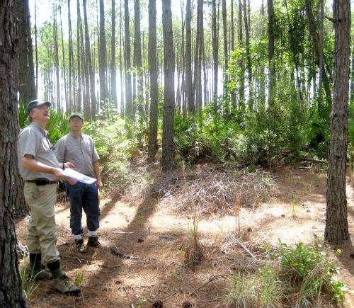 La fertilización forestal puede aumentar la producción y disminuir las emisiones de carbono, dice un experto