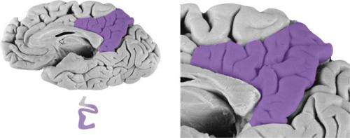 Memory vs. Math: Same brain areas show inverse responses to recall and arithmetic