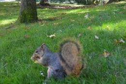 Fox squirrels show long-term investment savvy when hoarding nuts
