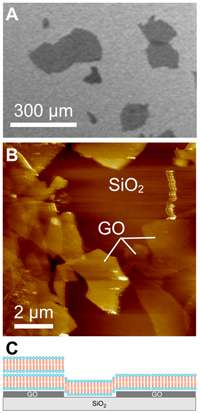 Graphene: Potential for modelling cell membrane systems