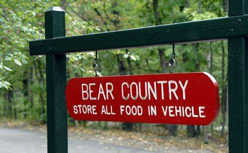 How to Avoid Getting Eaten by a Bear and Other Outdoor Safety Tips