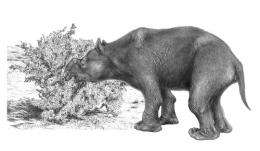Hunters, not climate change, killed giant beasts 40,000 yearsago