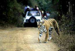 India's top court has suspended tourism in core areas of tiger reserves to protect the animals