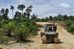 Indonesia is the world's biggest palm oil producer but activists fear it is having a dire impact on wildlife