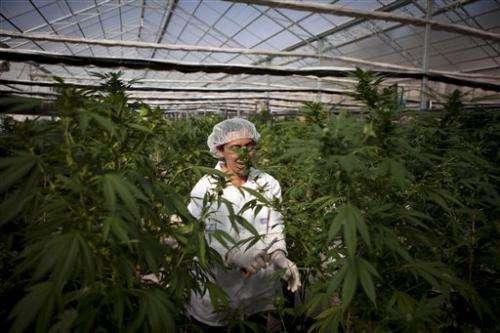 Israel pushing ahead in medical marijuana industry
