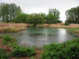 Restored wetlands rarely equal condition of original wetlands