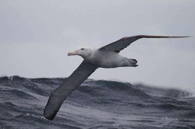 Largest bird alters its foraging due to climate change