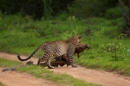 Leopard in dramatic photo traced to 2004 camera trap