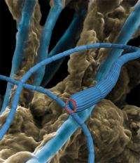 Live cables explain enigmatic electric currents
