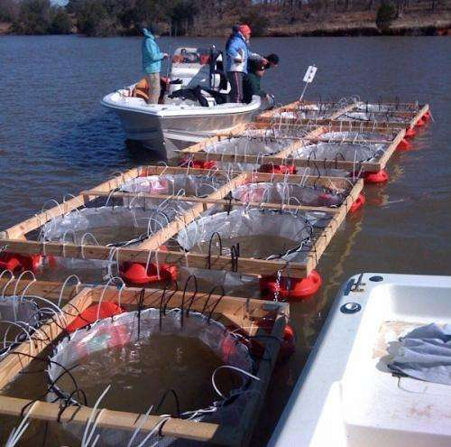 Low pH levels can eliminate harmful blooms of golden algae, one cause of massive fish kills