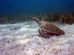 Marine Protected Areas are keeping turtles safe