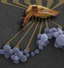 Melanin considered for bio-friendly electronics