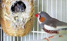 Monogamous birds....peeping on the neighbors!