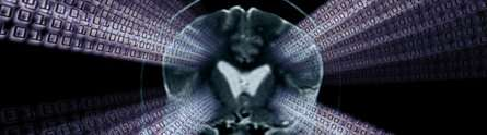 MRI research sheds new light on nerve fibres in the brain