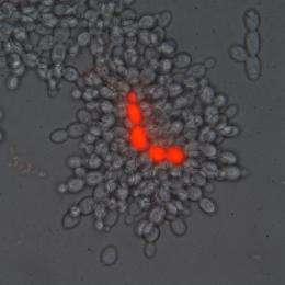 Biologists Replicate Key Evolutionary Step in Life on Earth