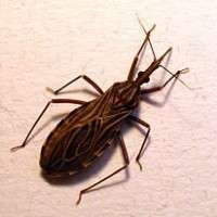 Murdoch research finds Chagas cure