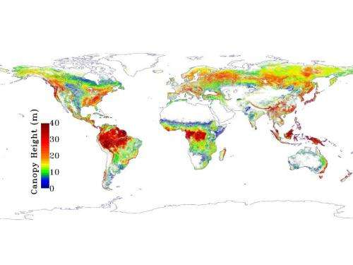 NASA map sees Earth's trees in a new light