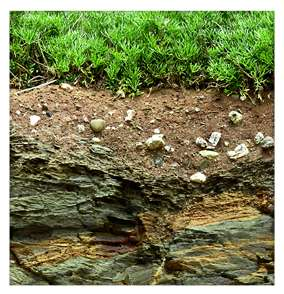 New data suggest bacteria have a direct effect on rock weathering