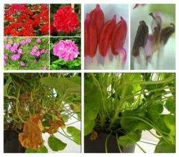 No more sneezing, allergen free house plants