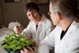 Novel approach to curing crop diseases tested
