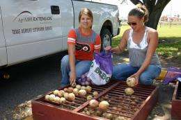 Rains wreak havoc on South Texas onion crop